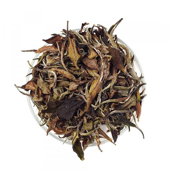 Белый Хоста Чай фото