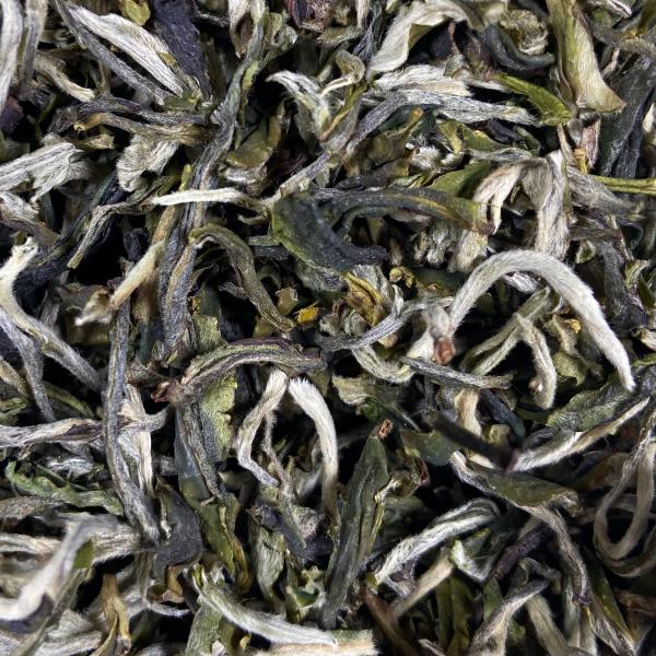 Зелёный чай Маофэн Юньнаньский «Ворсистые Пики» 2019 фото