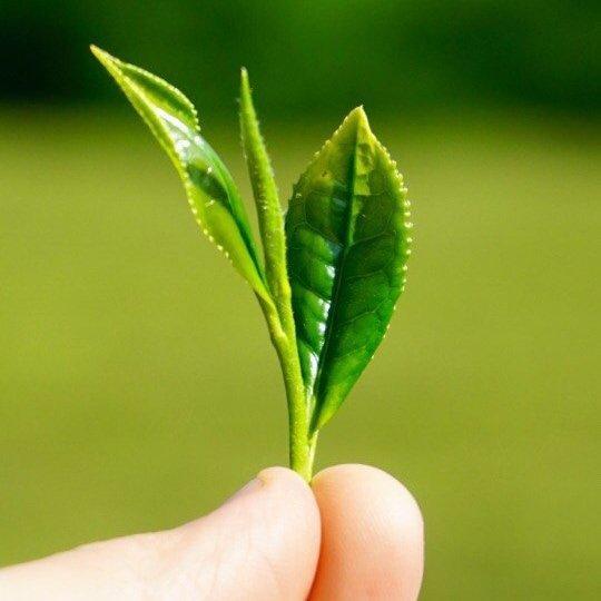 Чайный набор «Знакомство с зелеными»