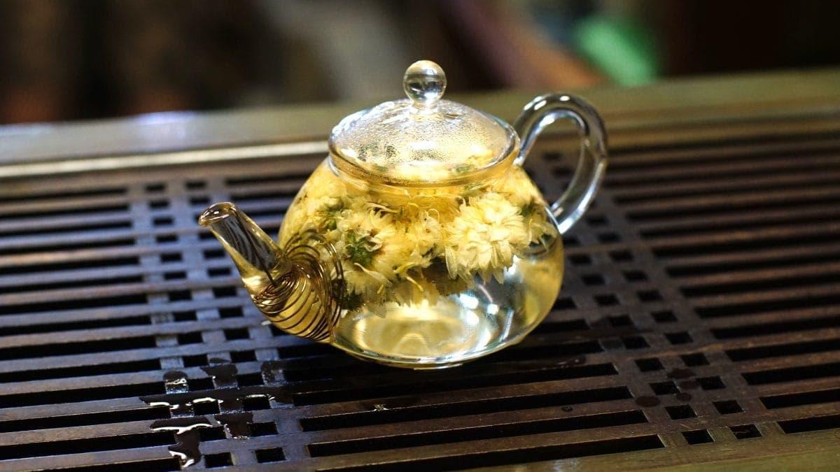 Хризантема чайник фото